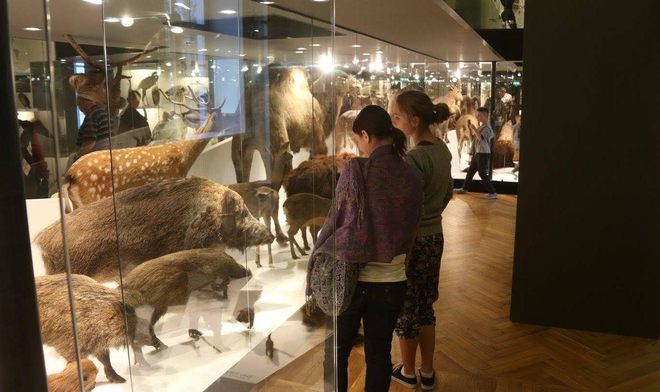 Kõige külastajasõbralikum on Tartu ülikooli loodusmuuseum 1cfd8efd120